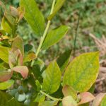 Impact of Mineral Deficiency Stress